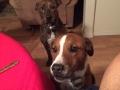 Koby wants Xmas dinner too.